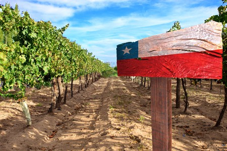 Vineyard cabernet sauvignon from Chile / © StudioTrindade51 / Shutterstock