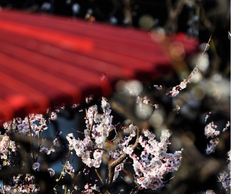 The plum blossoms at Yushima Tenjin   © kanegen / Flickr