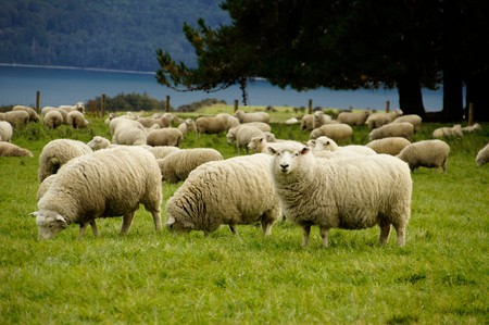 Sheep farm in Lake Wakatipu | © ItravelNZ/Flickr