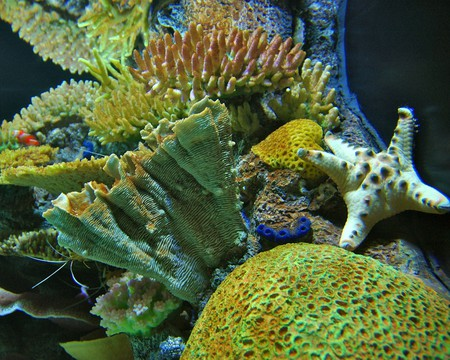 On Top of the World:  Tennessee Aquarium, Chattanooga   (c) Woody Hibbard / Flickr
