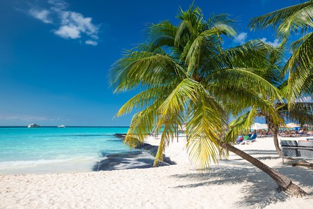 Coconut palm on caribbean beach, Cancun, Mexico | ©  photopixel/Shutterstock