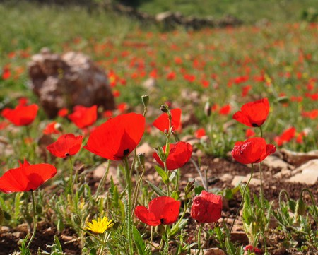 Bursting Into Bloom © young shanahan