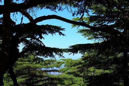 Cedars of God |© rabiem22 / Flickr
