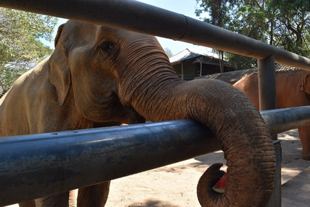 Elephant feeding | © Nikki Vargas / Culture Trip