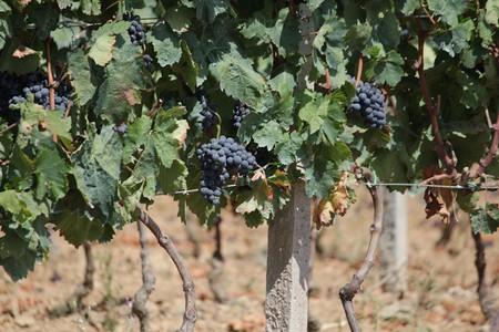 Sardinian Vineyard © Jan Murin/Flickr