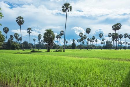 Battamabng is full of stunning countryside | © Elite Studio/ Shutterstock