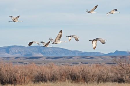 Cranes in flight | © Brian Ralphs / Flickr