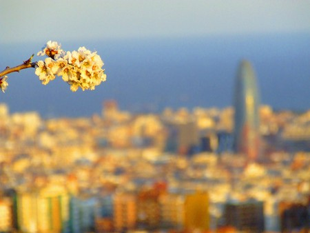 Spring unfolding in Barcelona | © robin robokow / Flickr