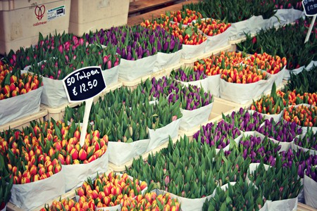 Tulips and other flowers at the Bloemenmarkt in Amsterdam | © Meg Marks / flickr