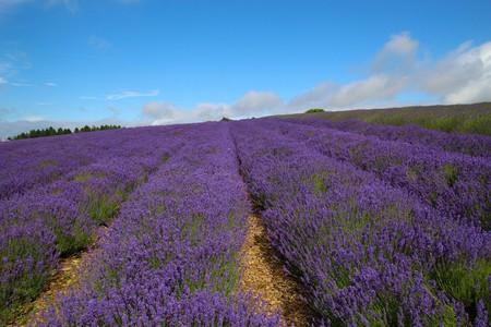 Cotswold Lavender Farm | © Kathryn Yengel/Flickr