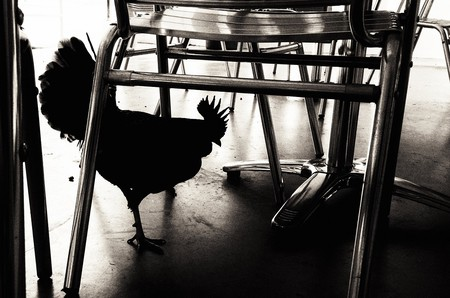 The Scary Black Chicken | © Alan Levine / Flickr