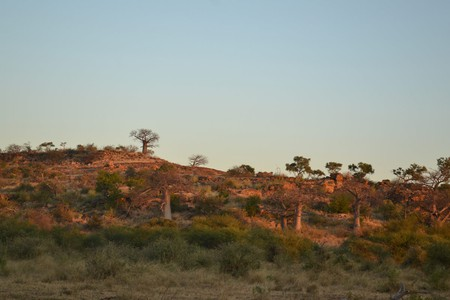 The Mapungubwe National Park was previously known as Vhembe Dongola National Park |  © René de Klerk
