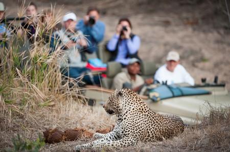 Animal tourism ©Villiers Steyn/Shutterstock