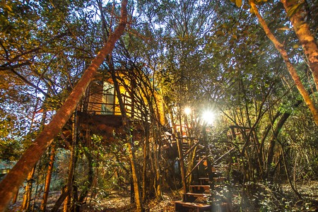 Teniqua Treetops specialise in self catering honeymoon tree houses | Courtesy of Teniqua Treetops