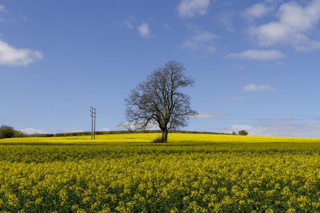Yellow Fields Of Wiltshire  | © Angel Ganev/ Flickr