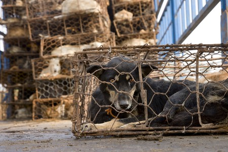 Dogs in cages | © Animals Asia / Flickr