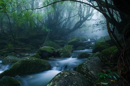 Mononoke forest, Yakushima island   © Casey Yee / Flickr