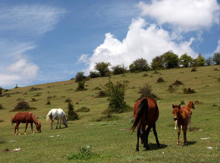 Nature in the Mazandaran province | © NInara / Flickr