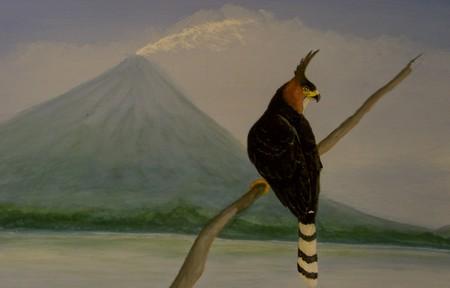 Ornate eagle   © Carol Patterson/Flickr