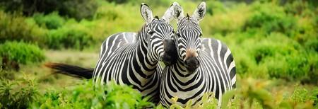 Happy Zebras| © by Pixabay / Pexels