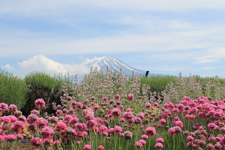 Wildflowers and Mount Fuji   © KevinMeyer/Pixabay
