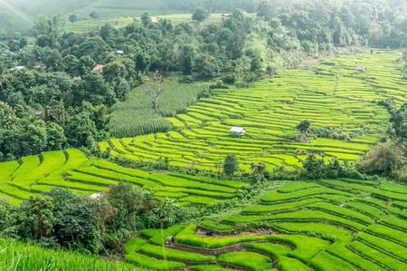 Rice Terraces   © Courtesy of hereisthailand/Pixabay