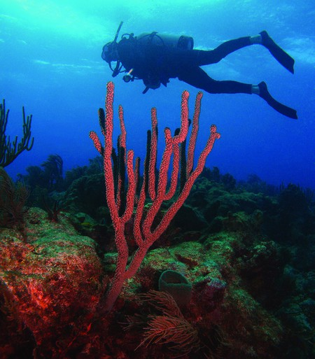 Scuba diving behind bright coral in Puerto Rico | © NOAA's National Ocean Service/ Flickr