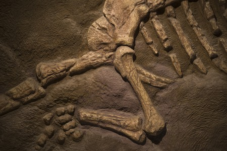 Dinosaur fossil   © Orenzy Photography / Shutterstock