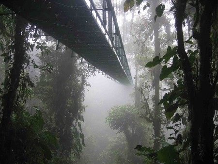 The Santa Elena Cloud Forest © Dirk van der Made/WikiCommons