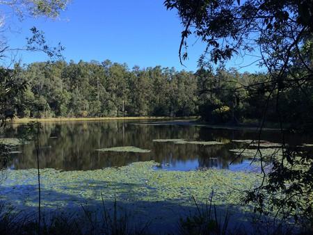 Enoggera Reservoir   © Tamyka Bell/Flickr