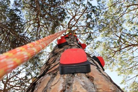 Tree Climbing   © Swings Camp