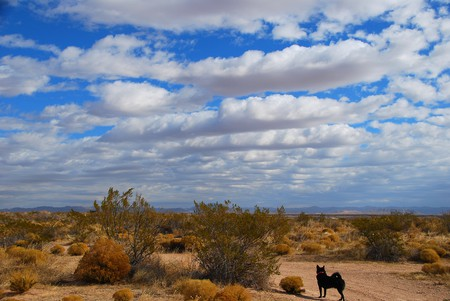 Desert outside El Paso, Texas | © Hadley Garland / Flickr