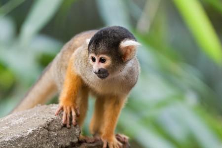 Monkey on the pampas trip | © Maciej/Flickr