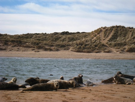 Seals, Ythan Estuary, Forvie Sands | © Iain Cameron/Flickr