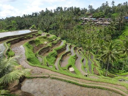 Tegalalang Rice Terraces   © Björn Bröskamp