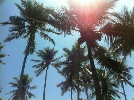 palm trees    © Courtesy of andre16/Pixabay