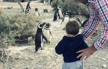 Kids visiting a penguin colony during an El Pedral program | Courtesy of El Pedral