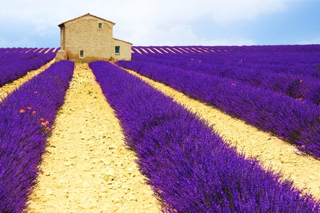 The lavender fields are a must-see in Provence | © Edler von Rabenstein/Shutterstock