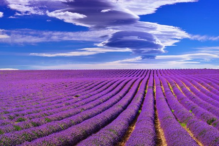 The Mistral Wind is behind everything beautiful to do with Provence | © Oleg Znamenskiy/Shutterstock