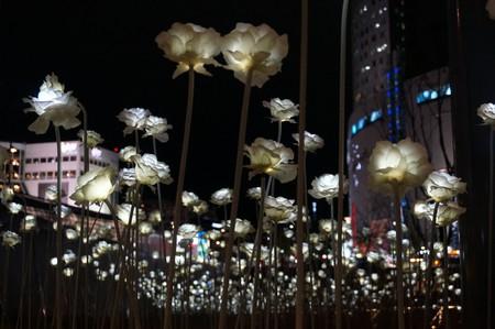 Dongdaemun Design Plaza LED Rose Garden   © wjl_yyc / Flickr