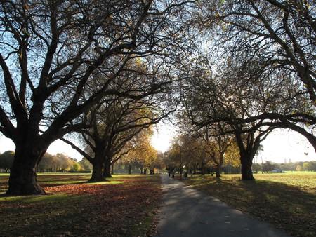 Hagley Park, Christchurch | © profernity/Flickr