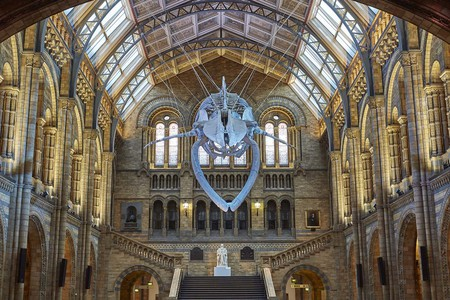 Blue Whale in Hintze Hall | © The Trustees of the Natural History Museum, London 2017. All rights reserved