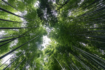 Bamboo Forest in Arashiyama, Kyoto | © Mark Choi 2017