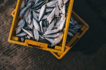 Fish | © Pixabay/Pexels