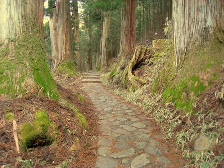 Ancient cedars at Nikko | © Daderot/Wikimedia Commons