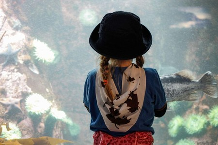Mesmerised at Vancouver Aquarium