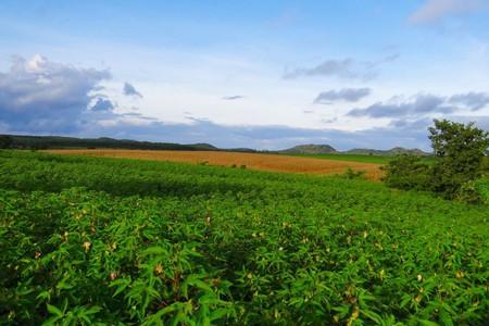Agriculture in India | © sarangib / Pixabay