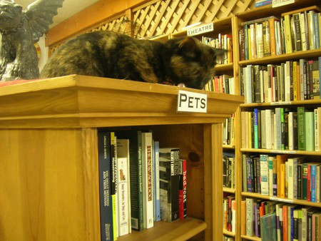 Cat at Ophelia's Books | © brewbooks / Flickr