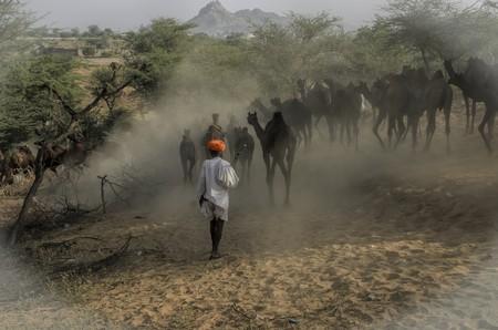 Puskar Camel Fair   © Arindam Mitra / Flickr