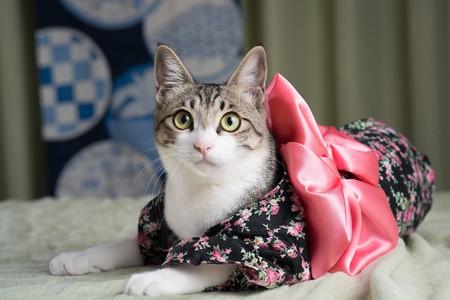 Kimono Kitty   © Big Ben in Japan/ Flickr